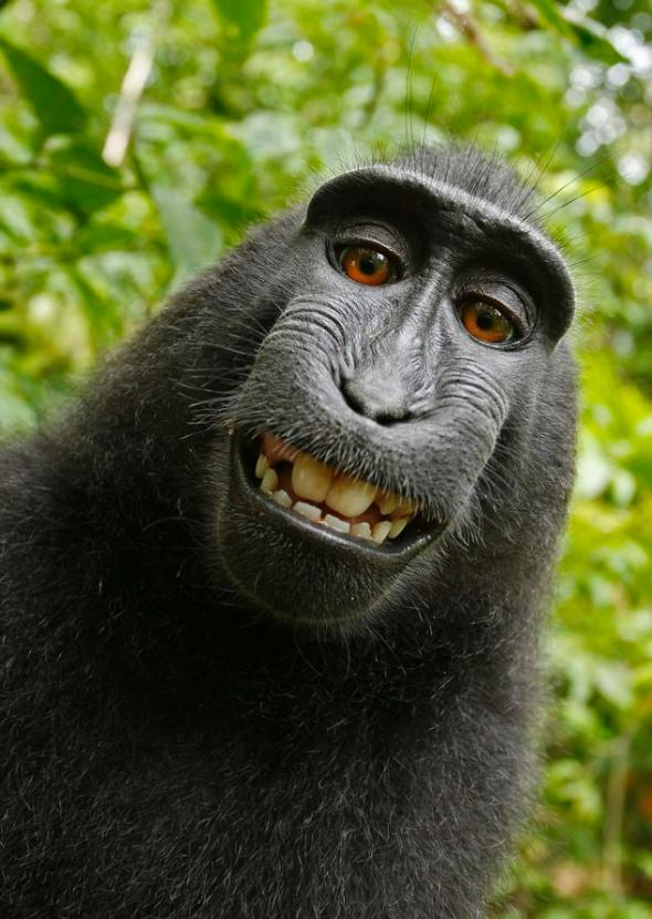Macaque Complications in Copyright Claim